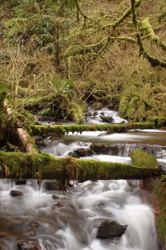 Munson Creek Falls in Oregon.