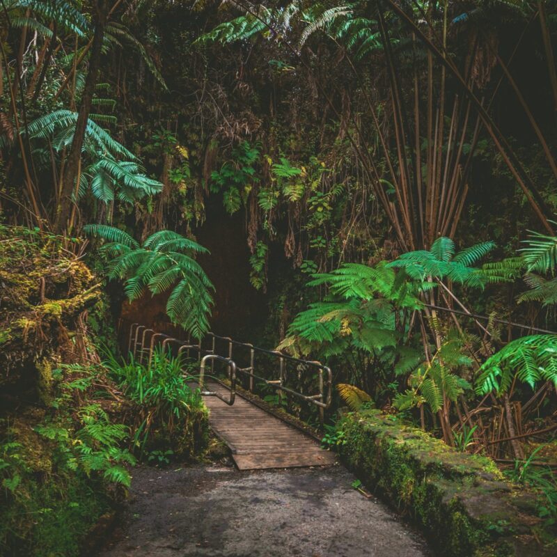 Nahuku, or the Thurston Lava Tube, Hawaii.