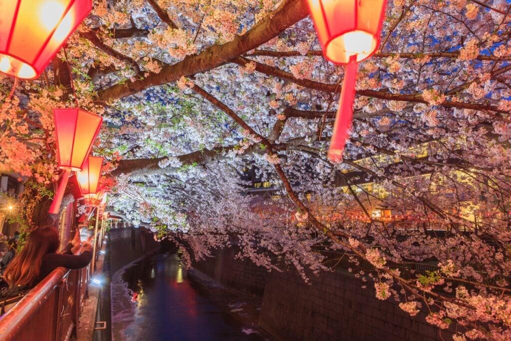 Nakameguro Cherry Blossom Illuminations in Tokyo.