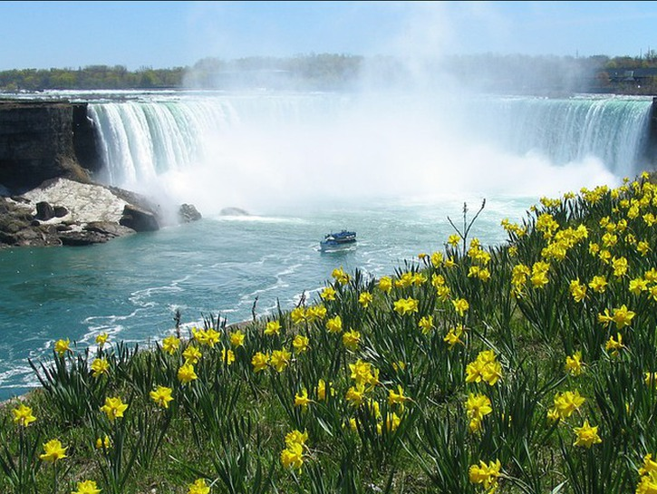 Niagara falls, with a boat in the foreground, seen from a grassy hillside with daisies