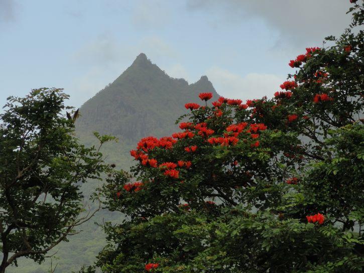 Nuuanu Pali Lookout in Oahu, Hawaii.