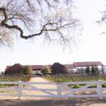 Oak Grove Vineyard in Lodi, California.