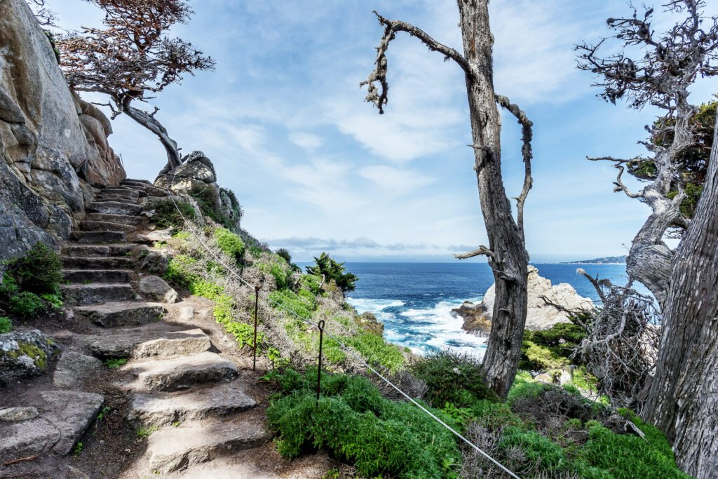 One of the many trails at Point Lobos.