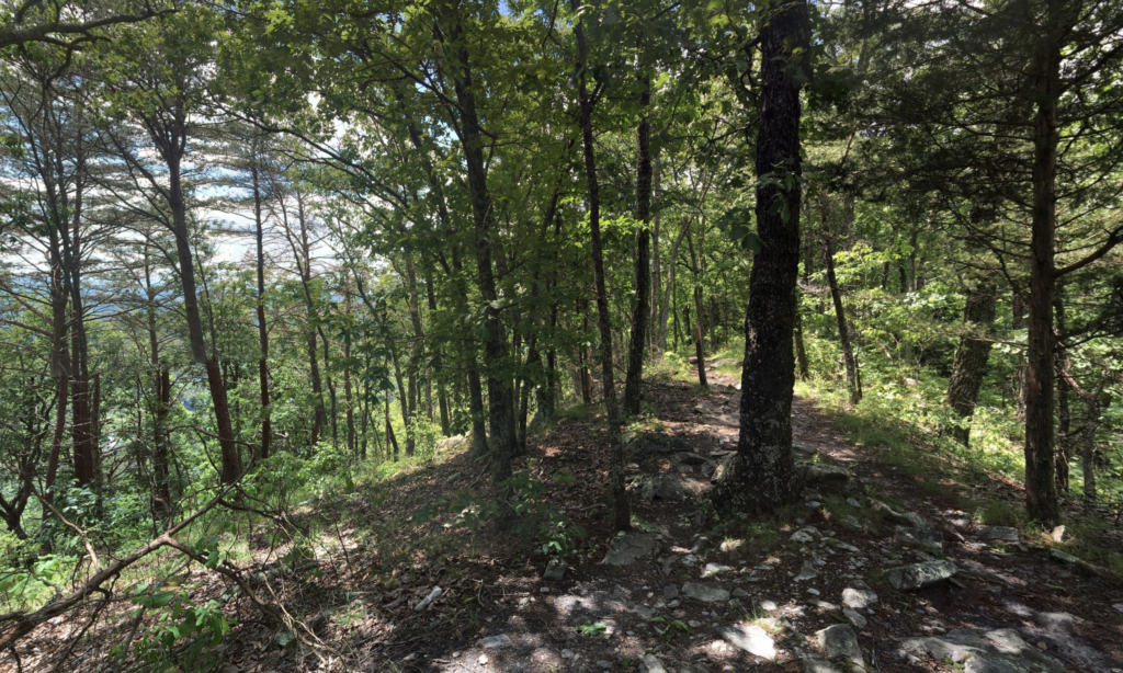 One of the many trails in House Mountain State Natural Area.