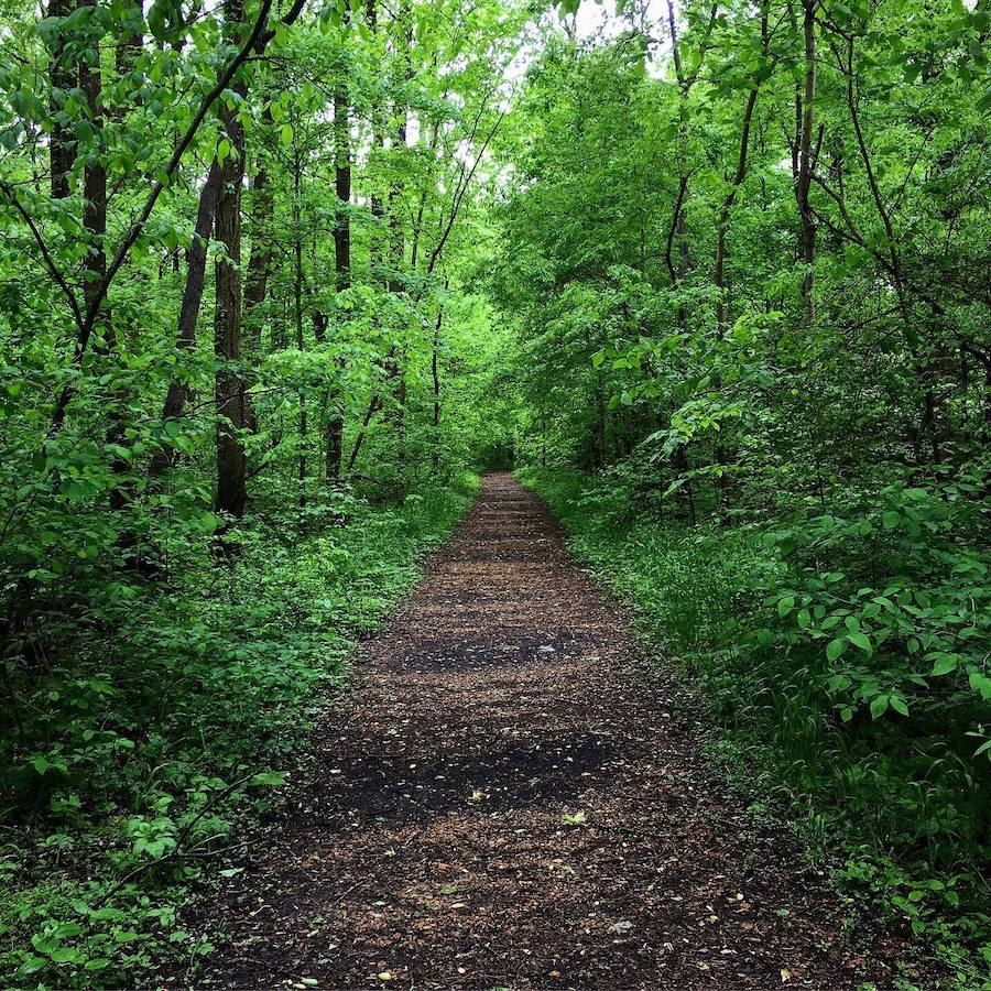 One of the trails in Meeman-Shelby Forest State Park.