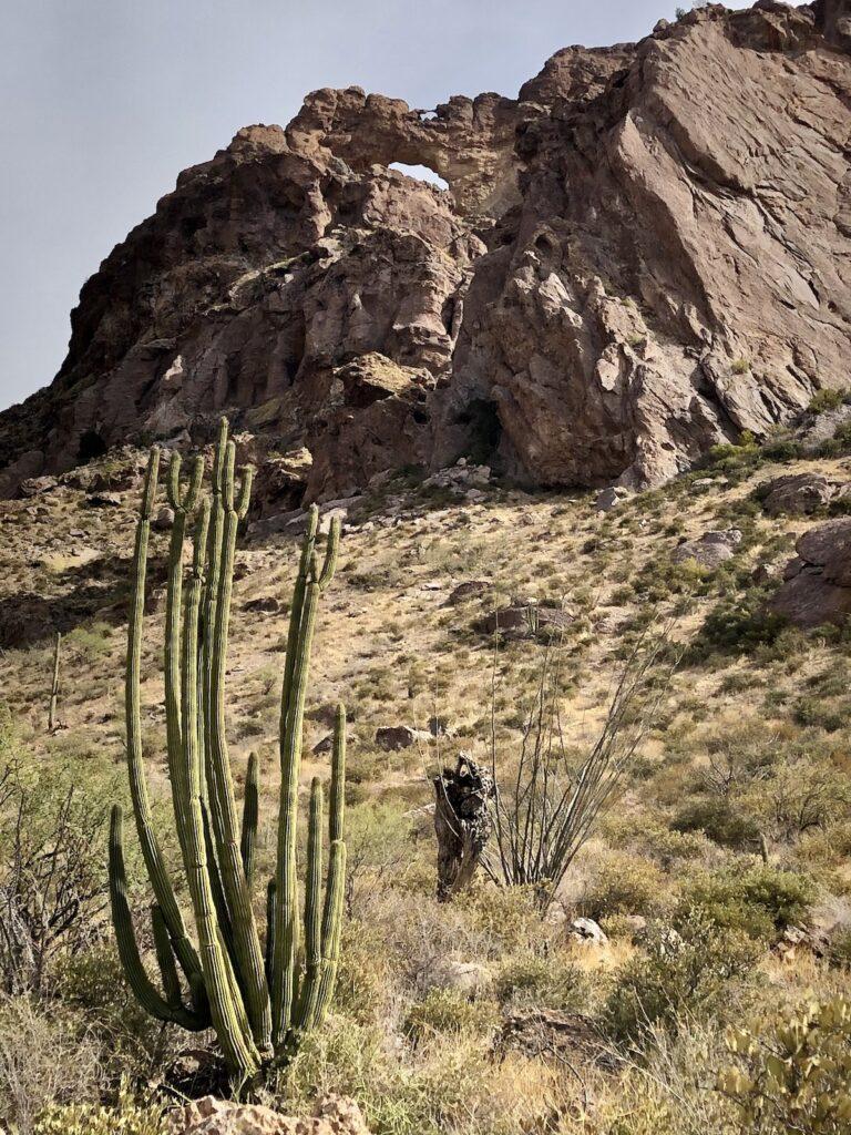Organ Pipe Cactus National Monument near Ajo, Arizona.