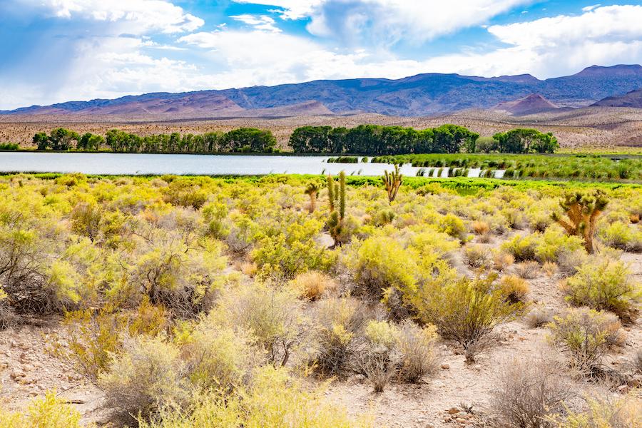 Pahranagat National Wildlife Refuge in Nevada.