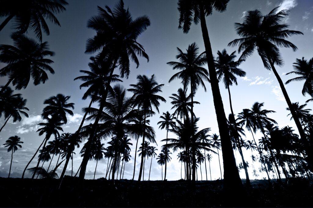 Palm trees at night.