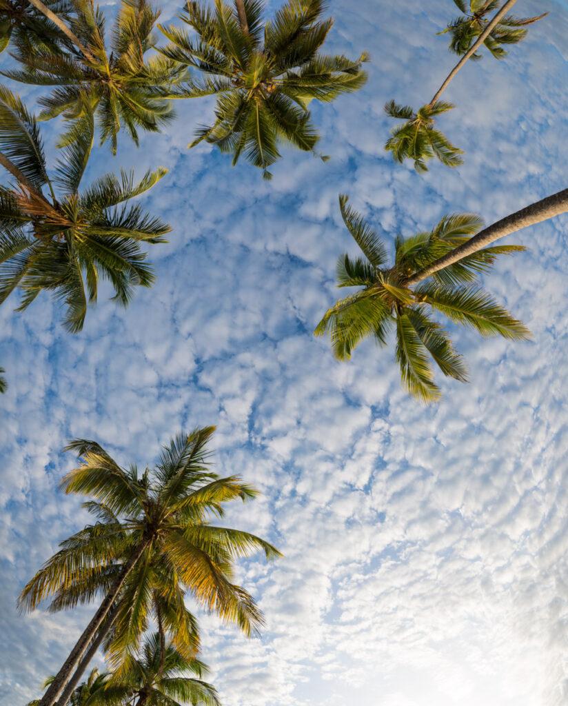 Palm trees on Mafia Island in Tanzania.