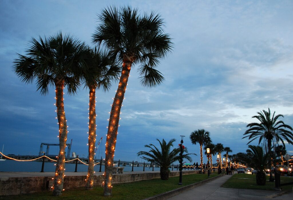 Palm trees with Christmas lines in St. Augustine.