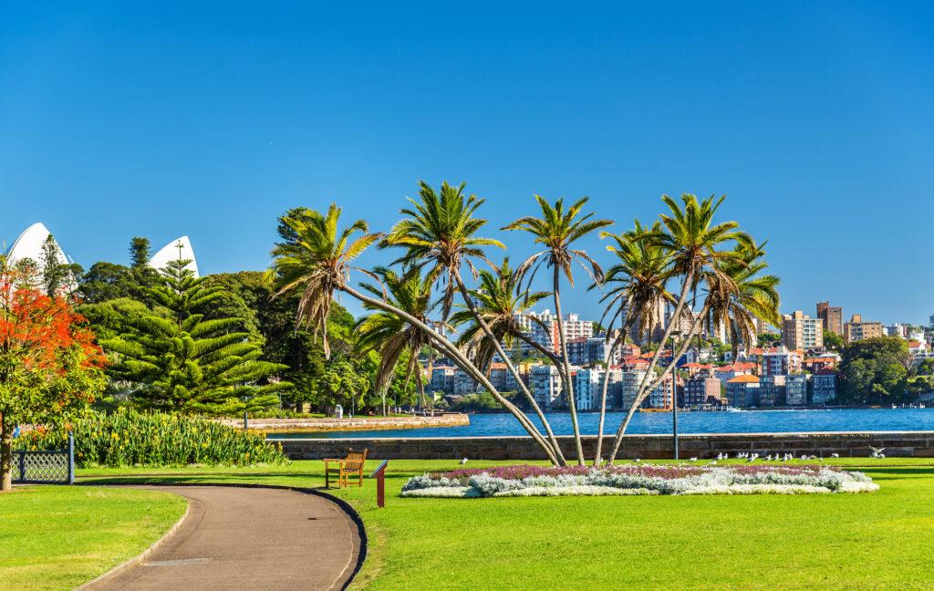 Pam trees in The Royal Botanic Garden Sydney