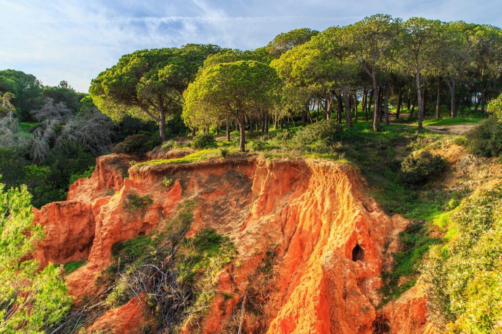 Parque Natural da Ria Formosa in the Algarve region.