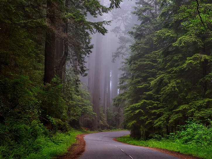 Paved roadway in forest