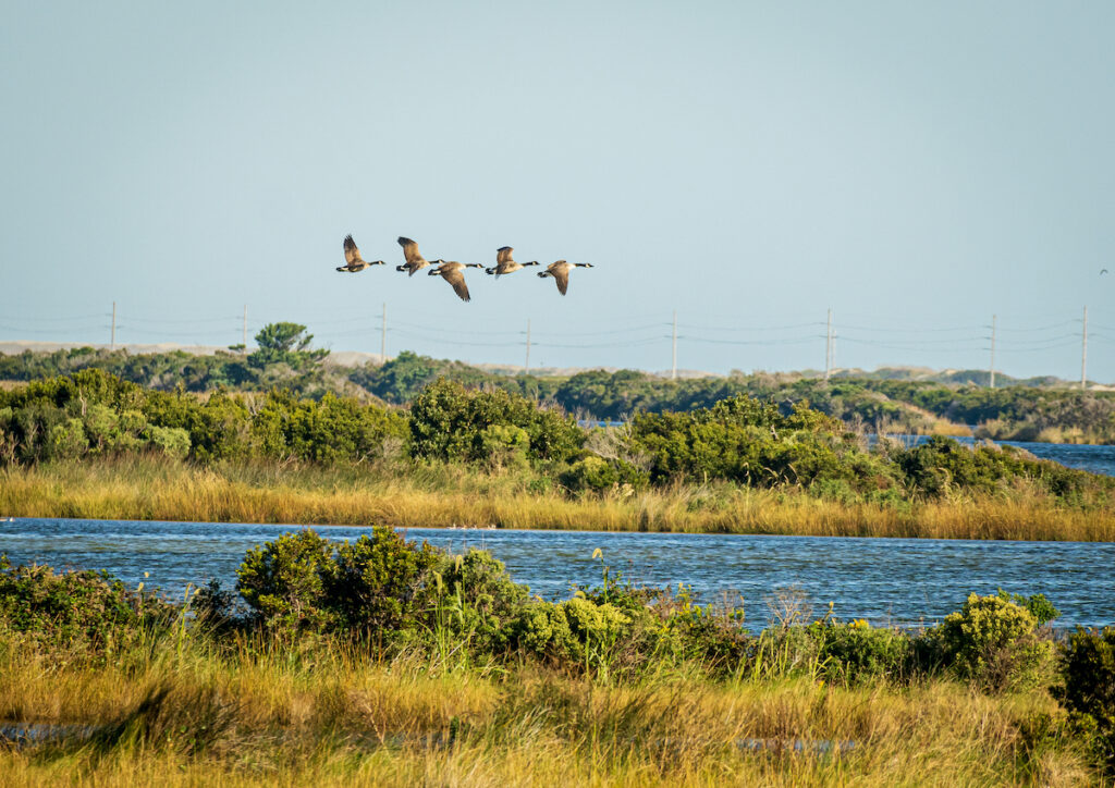 Pea Island National Wildlife Refuge in North Carolina.
