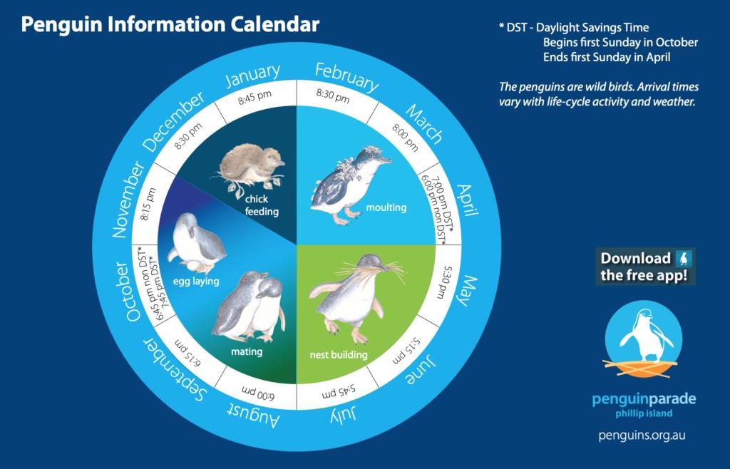 Penguin Information Calendar from penguins.org.au.