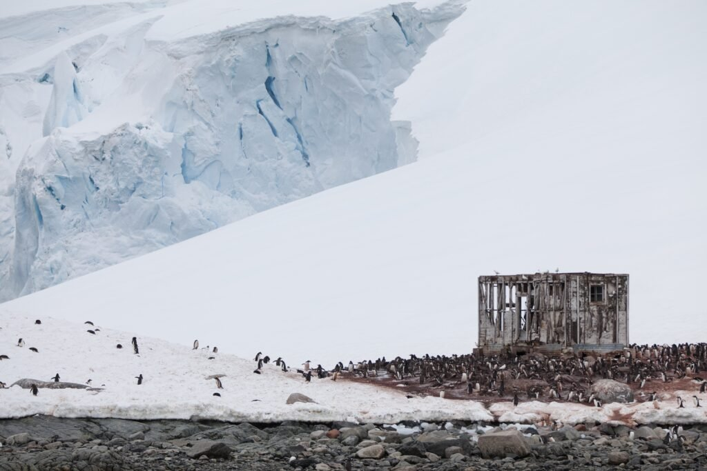 Penguins around an abandoned research station