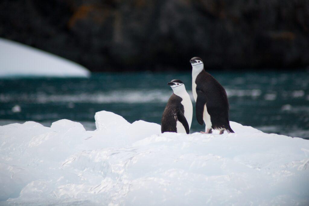 Penguins on an antarctic iceberg