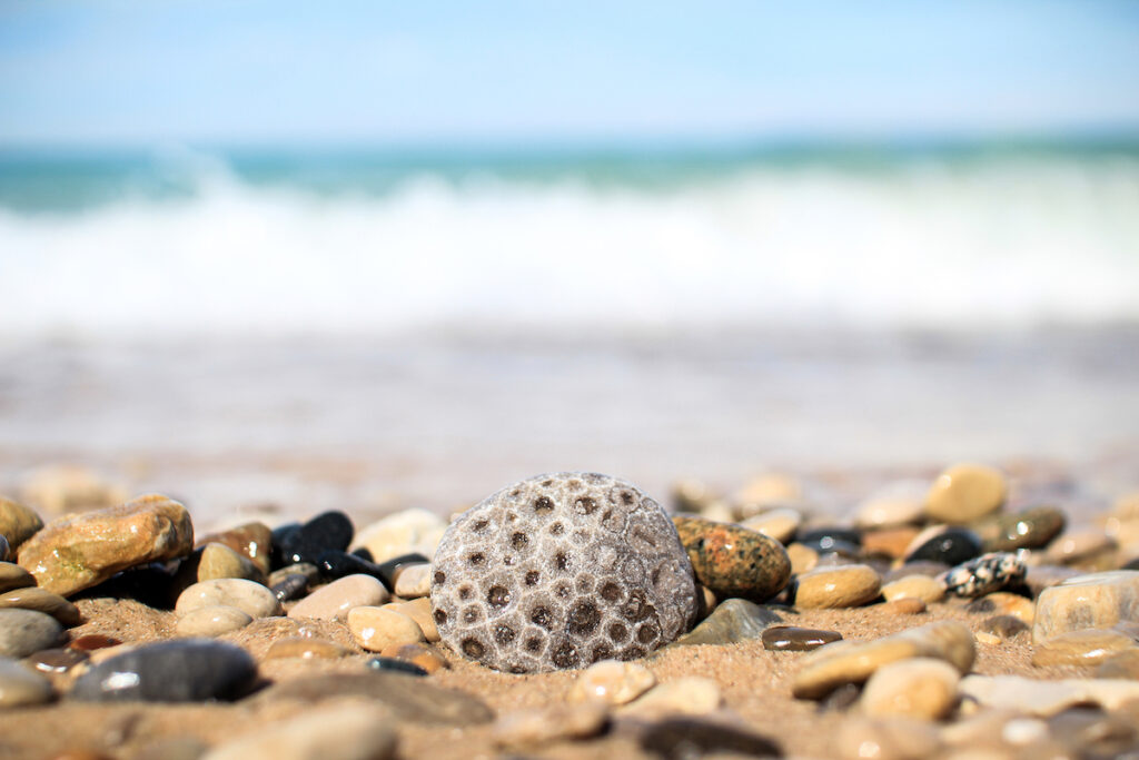 Petoskey Stones on the shores of Magnus Park.