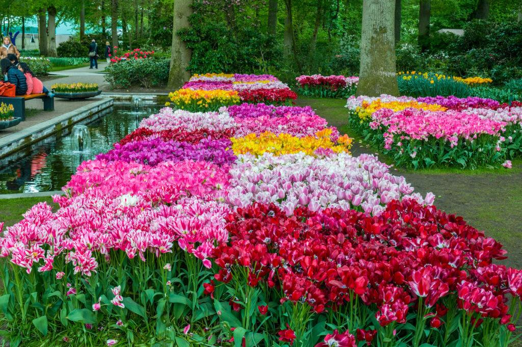 Pink flowers at Keukenhof Garden in the Netherlands.