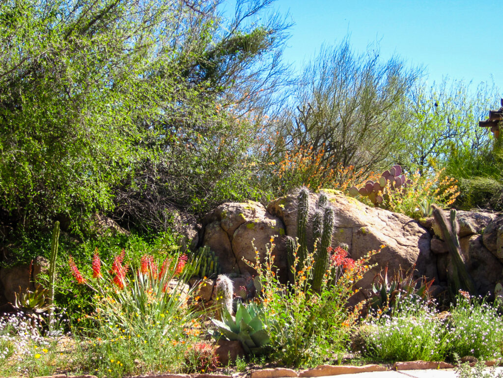Plant life at the Boyce Thompson Arboretum