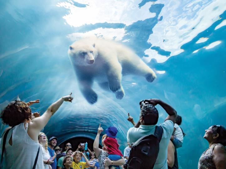 Polar Bears at Journey to Churchill Exhibit Winnipeg