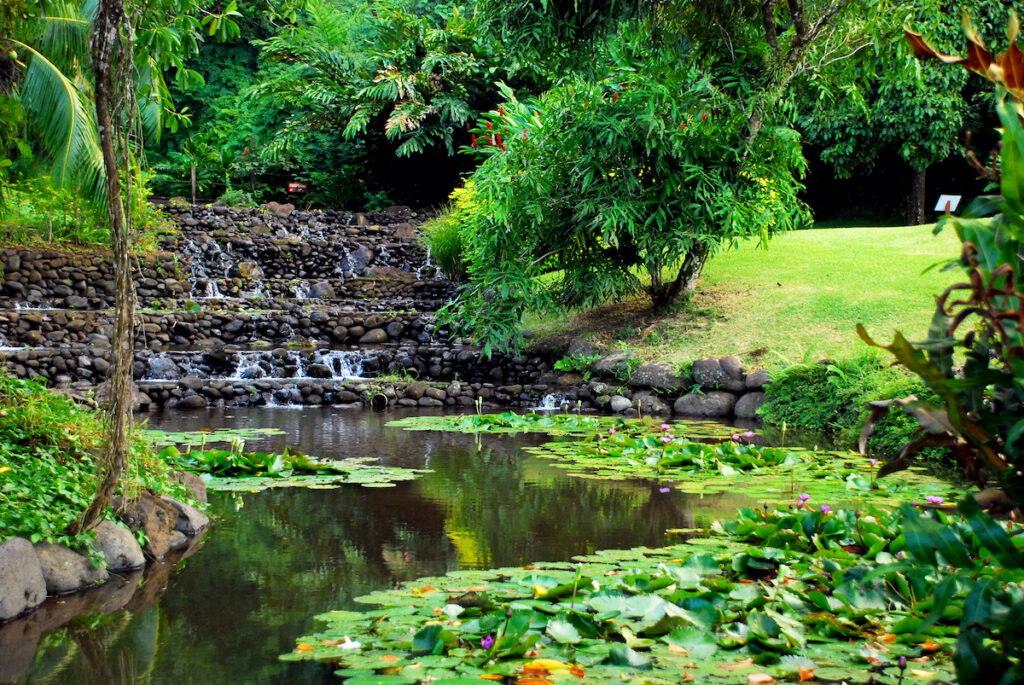 Ponds with lilypads in Vaipahi Gardens.