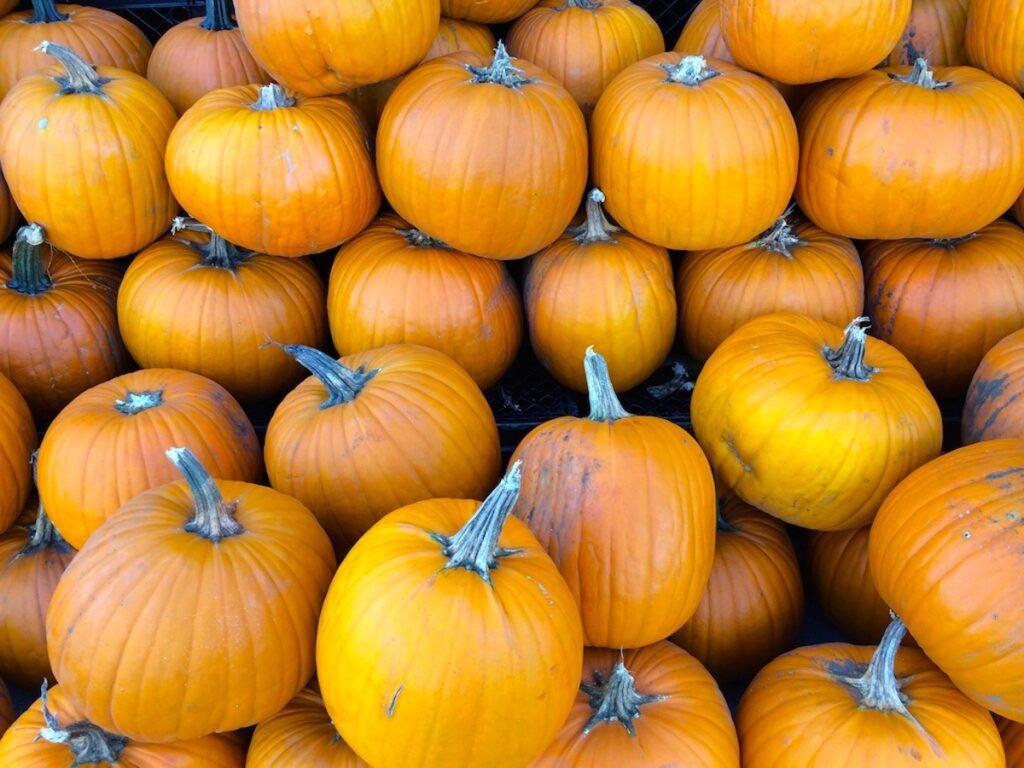 Pumpkins from a pumpkin patch in Wisconsin.