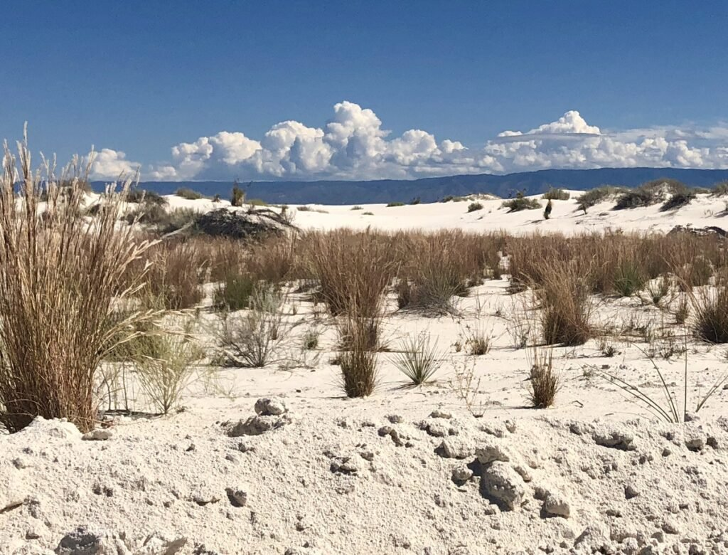 Red reeds in White Sands National Park.