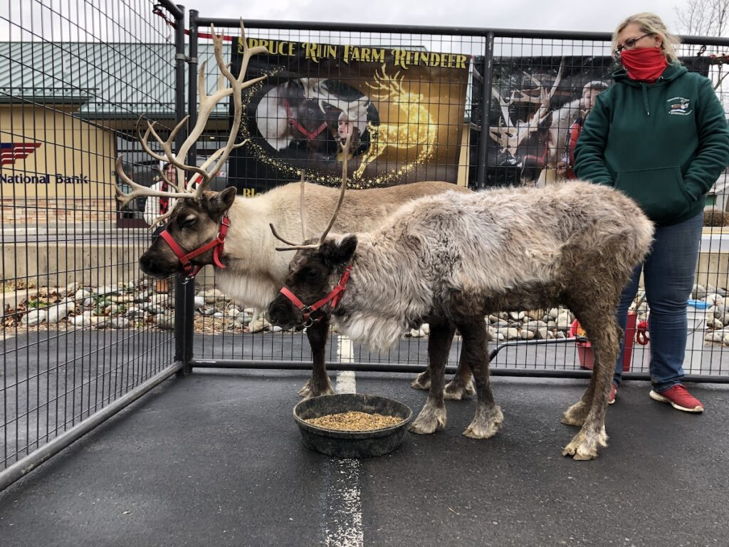 Reindeer in downtown Tunkhannock during Christmas.
