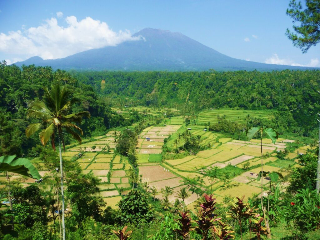 Rice fields at the foot of Mount Batur.