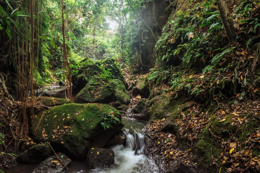 Sacred Monkey Forest Sanctuary in Bali.