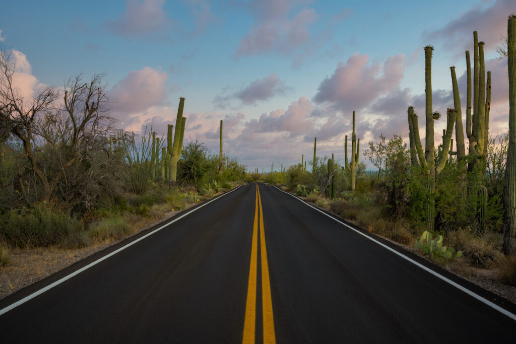 Saguaro cactus near Tucson, Arizona.
