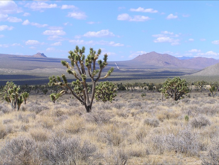 Scrubs and brambles, open plains, mountains in the background, Mojave National Preserve
