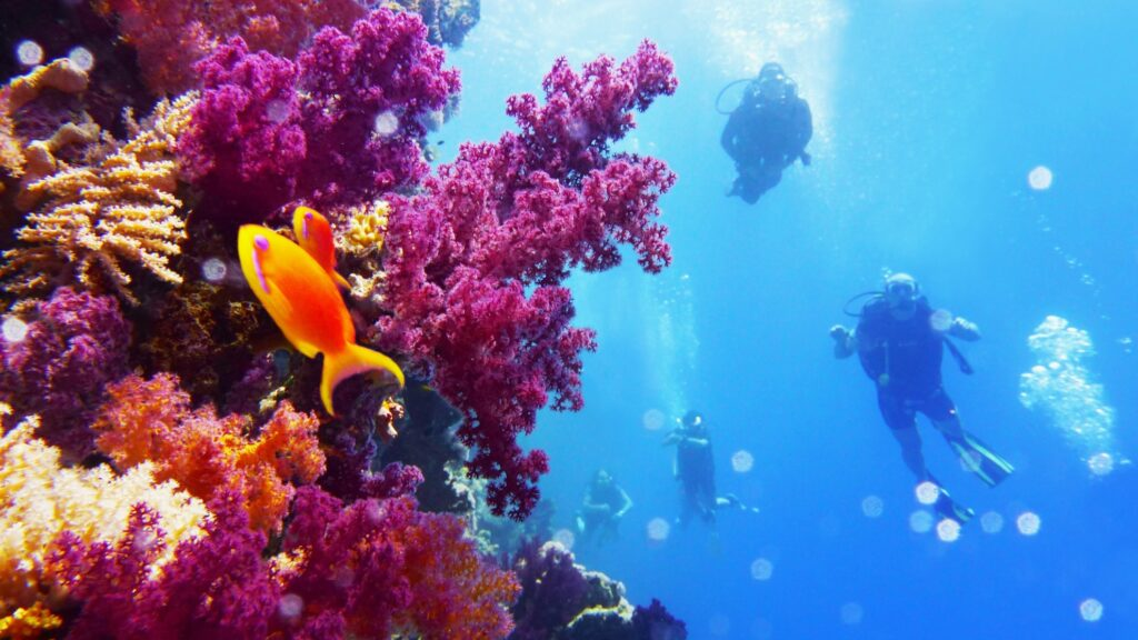 Scuba divers enjoying the wildlife at the Great Barrier Reef.