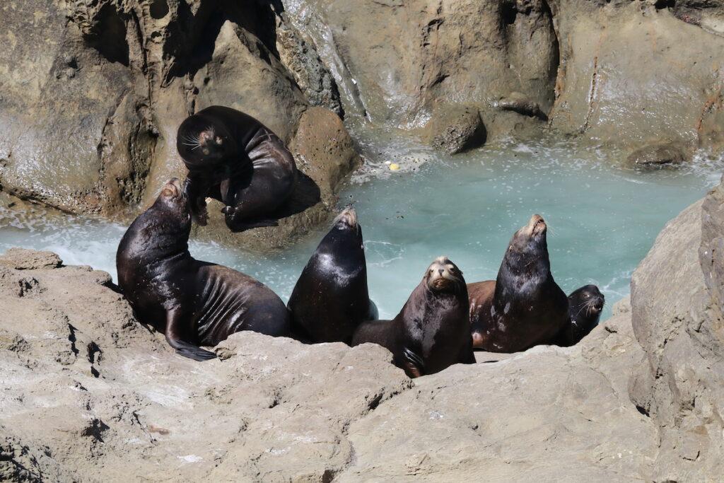Sea lions at Cape Arago State Park in Oregon.