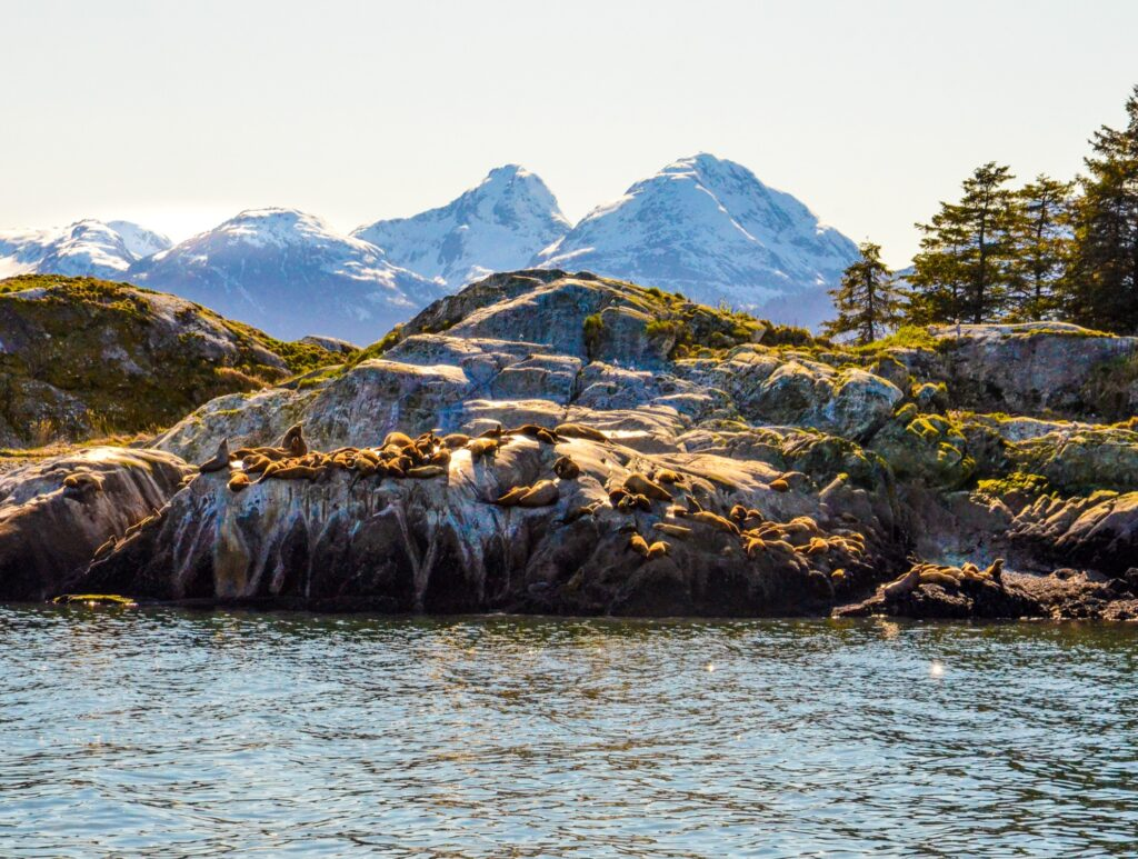 Sea lions near Marble Island in Alaska.