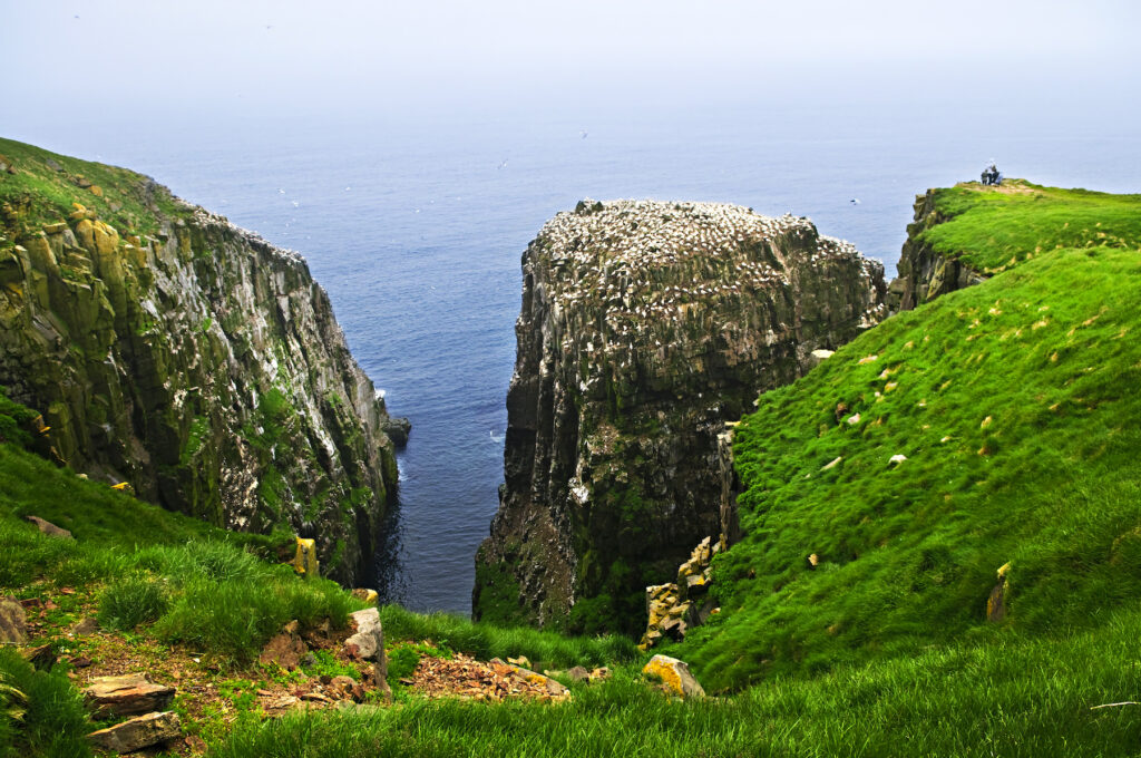Seabirds in Cape Saint Mary's Ecological Reserve.