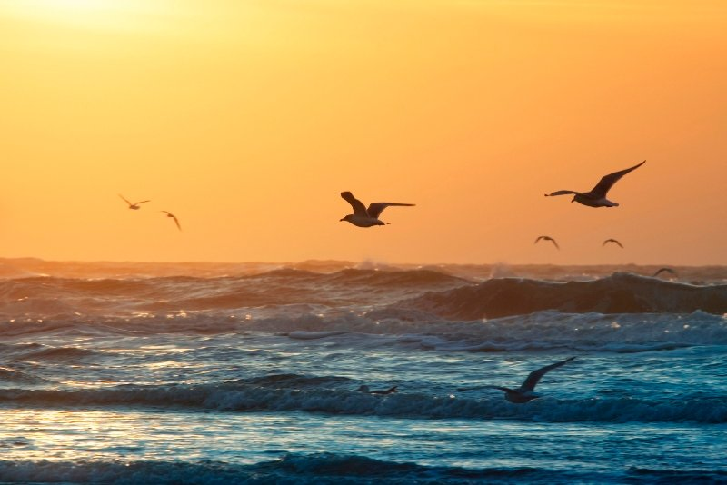 Seagulls flying over the ocean at sunset.