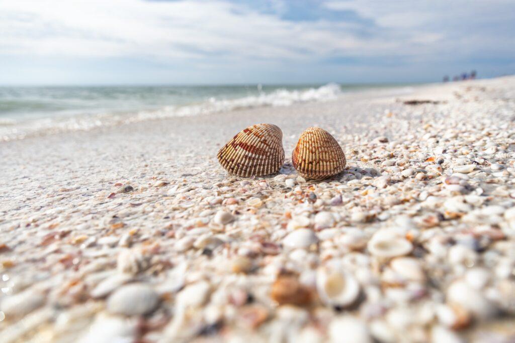 Seashells on a beach on Sanibel Island.