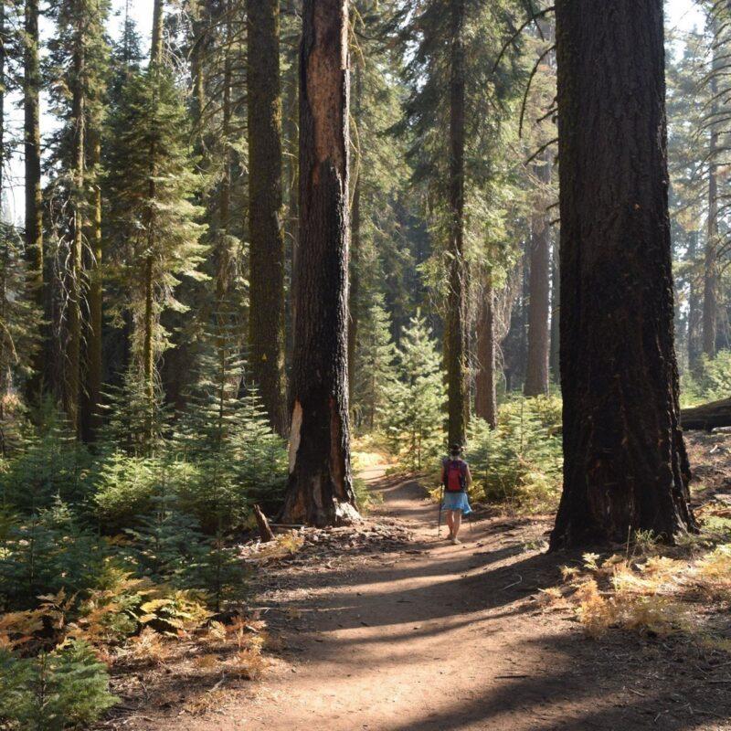 Sequoia National Park.