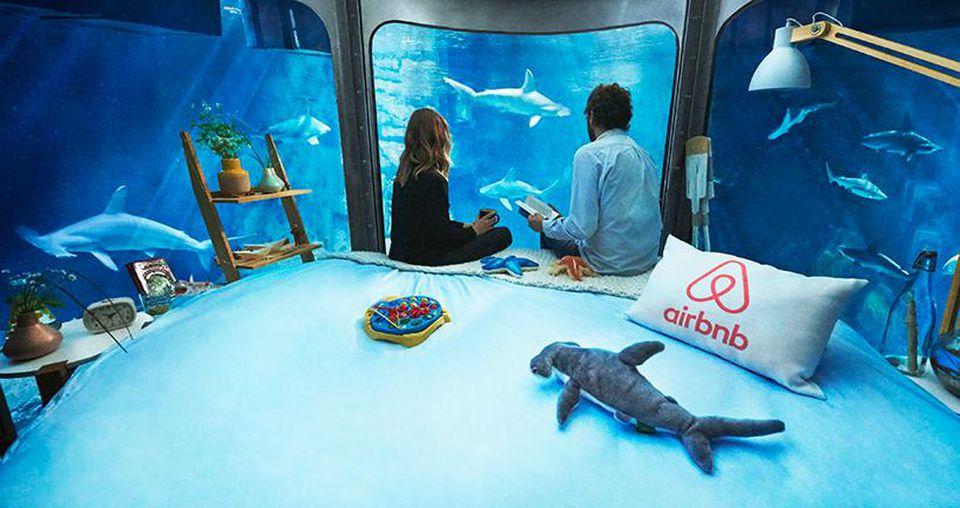 Shark Suite