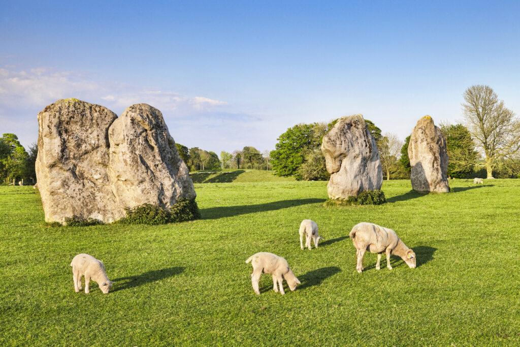 Sheep at Avebury Henge in Wiltshire, England.