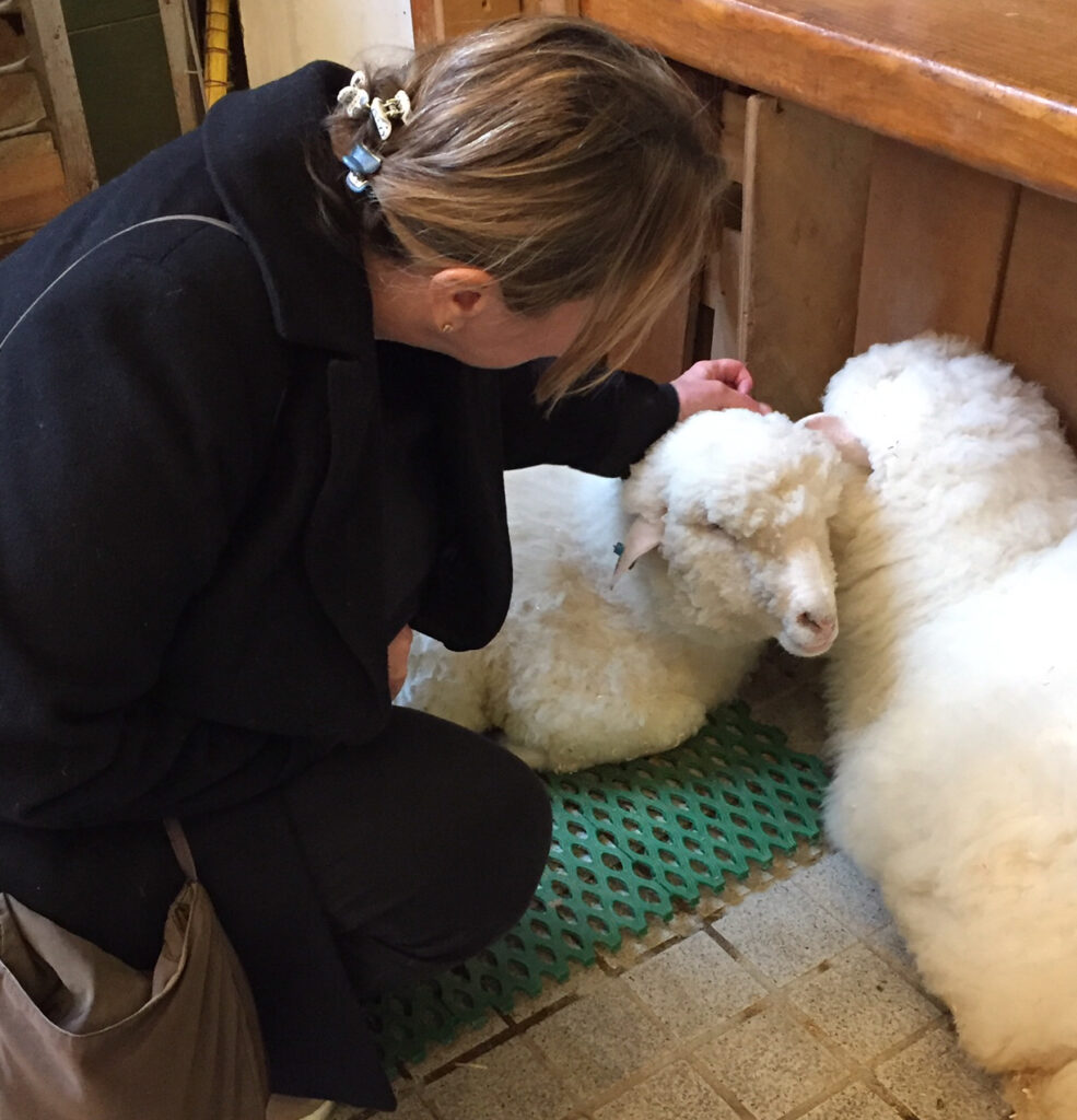 Sheep at Thanks Nature Cafe in Seoul.
