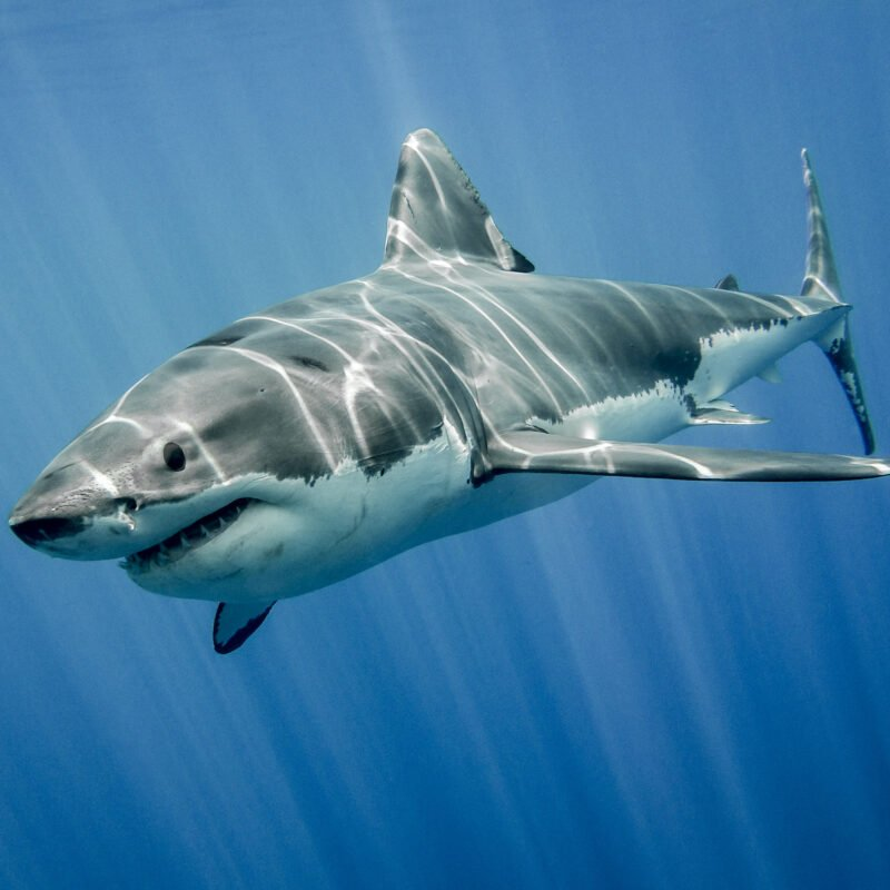 A shark underwater.