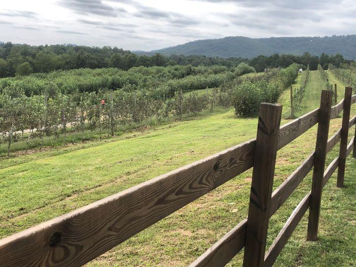 Sky Top Orchard in North Carolina.