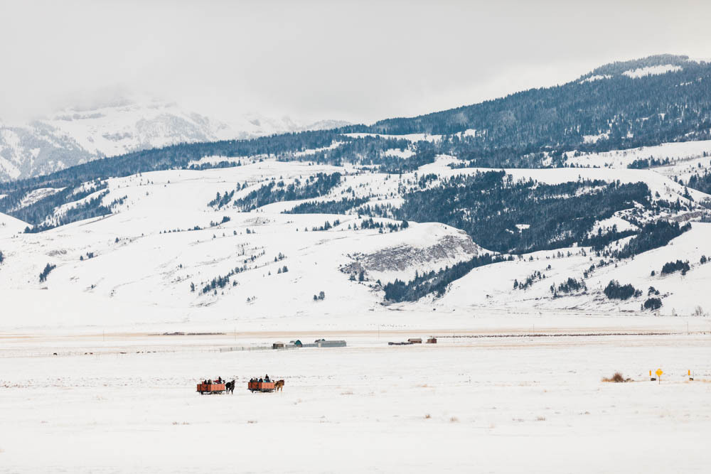 Sleigh rides in the National Elk Preserve.