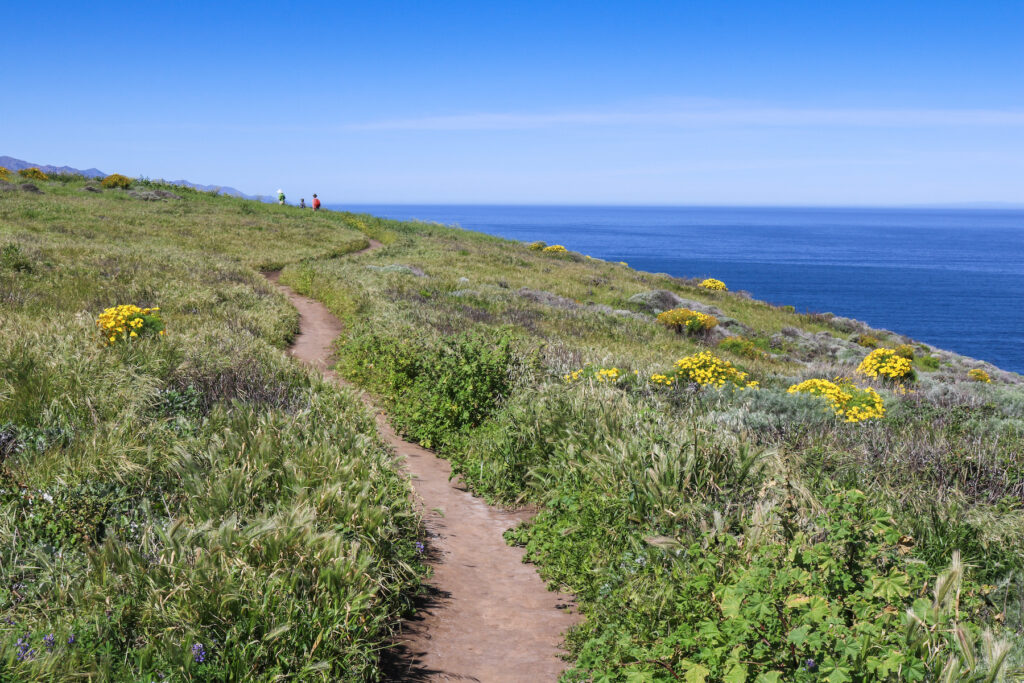 Smuggler's Cove Trail through Channel Islands National Park.