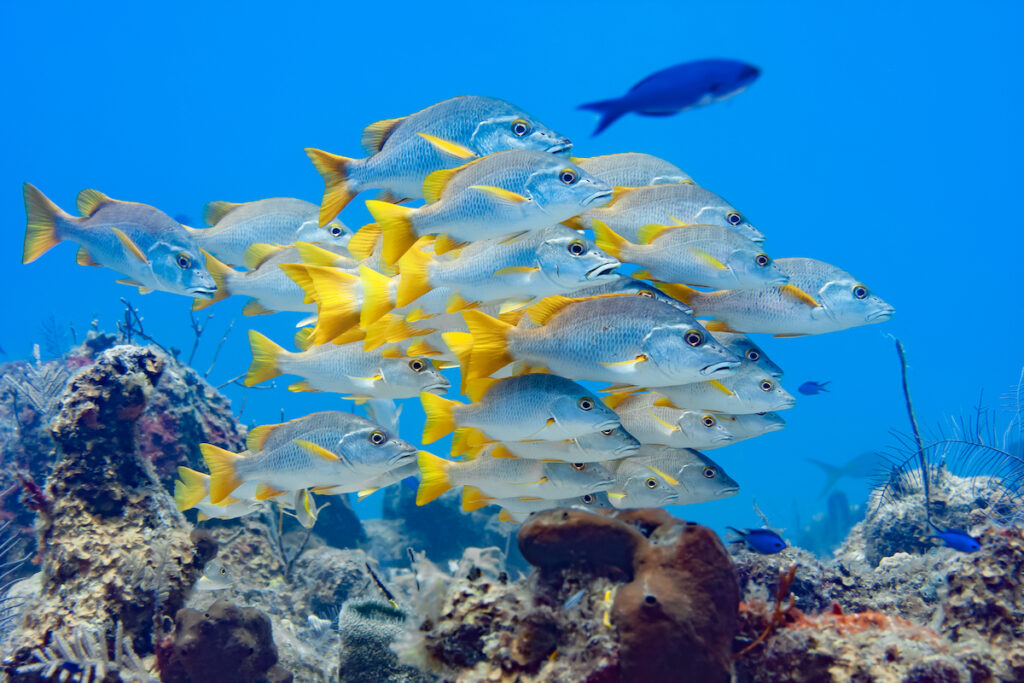 Snorkeling with tropical fish in the Turks and Caicos.