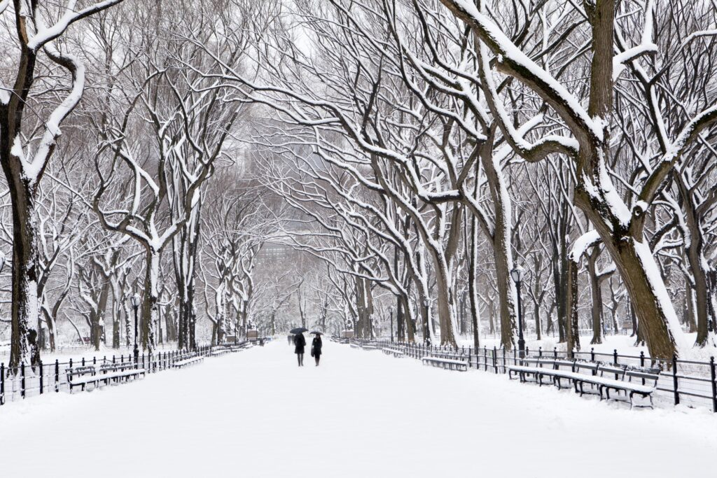 Snow in New York City's Central Park.