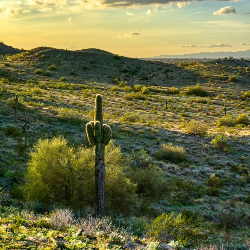 Sonoran Desert views at the South Mountain Park And Preserve.